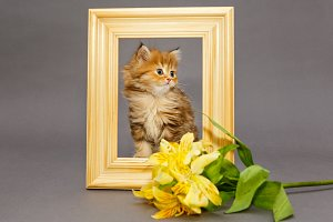 Little kitten in  photo frame