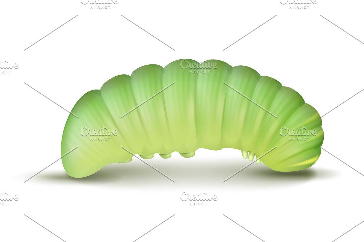 Light green caterpillar