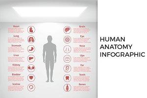 Human Anatomy Infographic