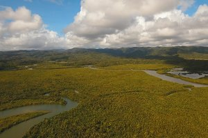 Mangrove forest in Asia. Philippines Catanduanes island.