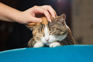 Hand of person stroking head of cute ginger cat