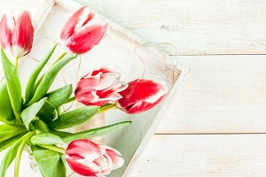 Spring concept with tulip flowers