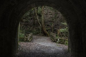 forest tunnel