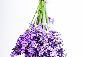 Lavender bunch close up