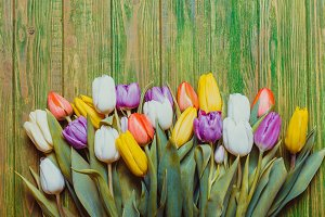 Color tulips on the board
