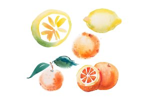 watercolor drawing set of tropical fruits, citrus aquarelle painting on white background