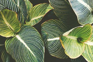 Striped Tropical Leaves