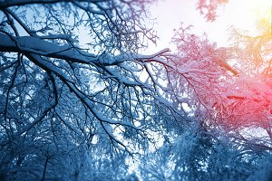 Snow on trees branches with light leak background