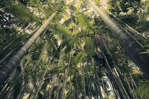 Trees in Mapleton Falls National Par