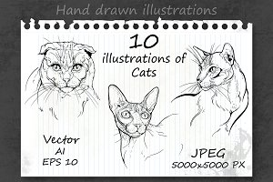 10 illustrations of cats.