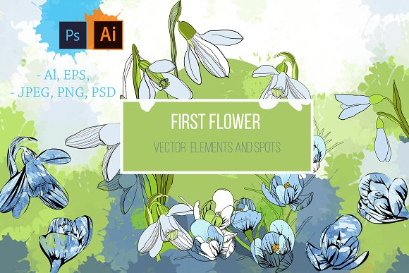 First flowers. Snowdrops. Vector