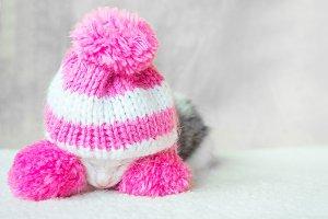A Cute Little Kitten in a Pink Hat