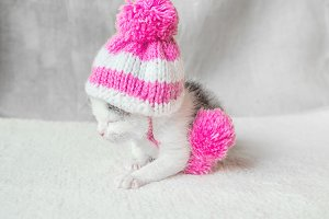 A Cute Little Kitten in a Pink Hat