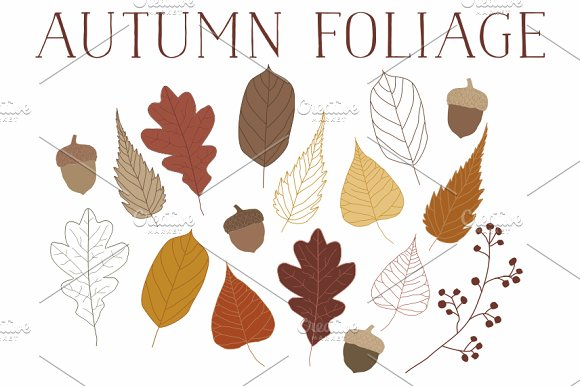 Vector Autumn Leaves & Acorns