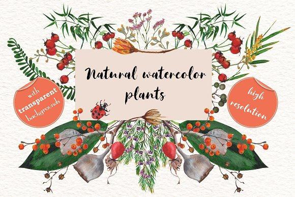 Natural watercolor plants