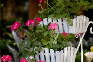 White rustic cute flower pot