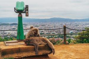 Monkey Skyline