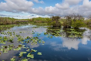 Lake and boardwalk in the Everglades