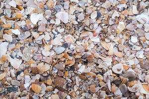 Shell fragments on the seashore. Background. Texture. Wallpaper