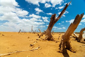 Dead Trees in a Desert Wasteland