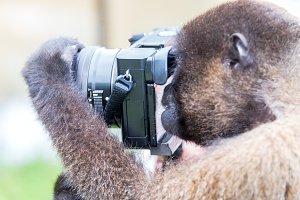 Monkey Using a Camera