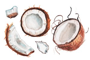 Watercolor coconut illustration