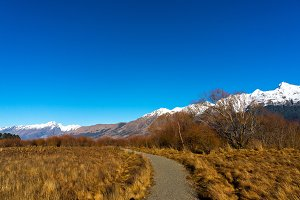 Hiking path along wild alpine vegetation