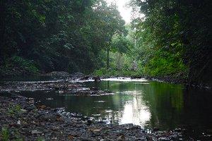 River in the rainforest. Bali,Indonesia.