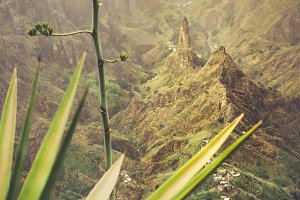 Close up of agava plants and rocky mountains in background in Xo-xo valley in Santo Antao island, Cape Verde