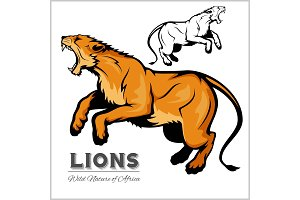 lioness. Vector isolated animal.
