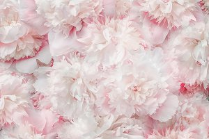 Pastel pink white flowers and petals