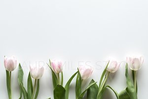 Tulips Flatlay Stock Photo