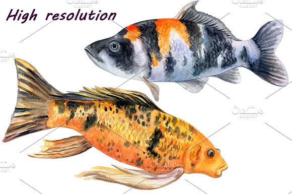 Koi carps. Water lilies in Patterns - product preview 7