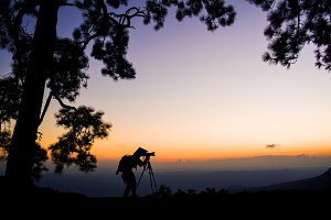 Silhouette photographer of pine tree