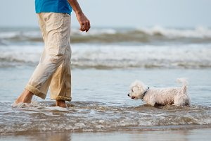 dog walking in the water with owner