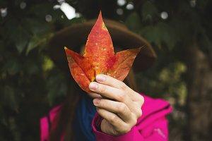 Female hand holding maple leaf