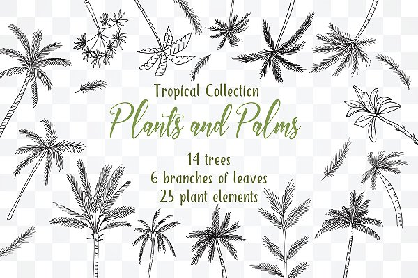 №264 Plants and Palms