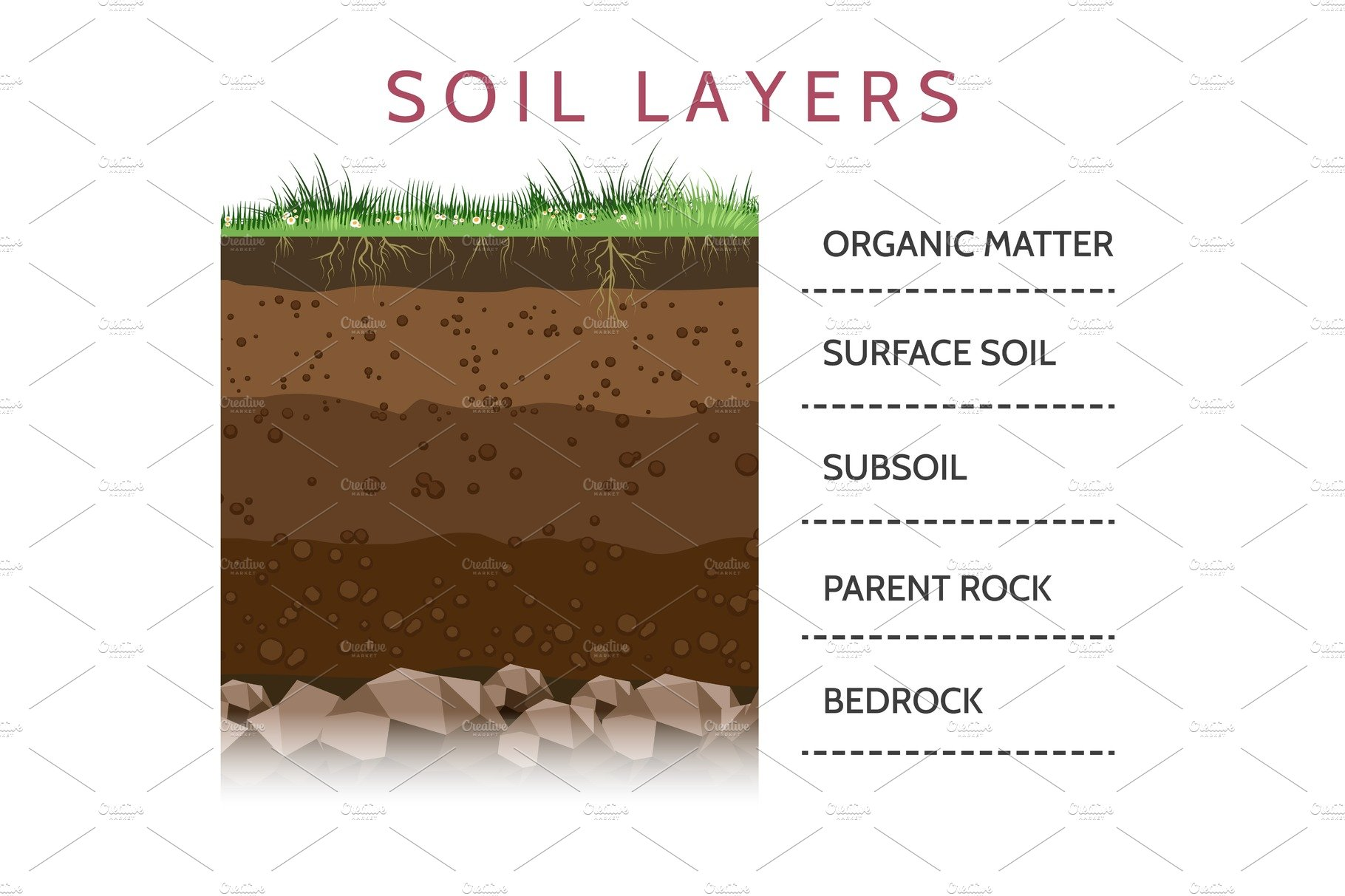 Soil layer scheme with grass illustrations creative market for What are the different layers of soil