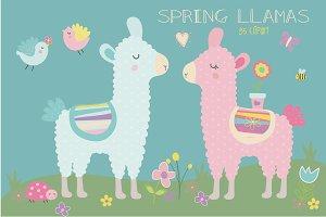Spring llama
