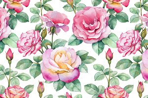 Watercolor illustrations of rose