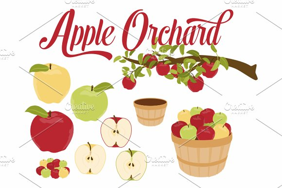 Apple Branch & Basket Vector