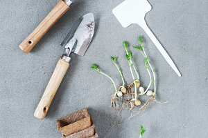 Garden tools on the gray table