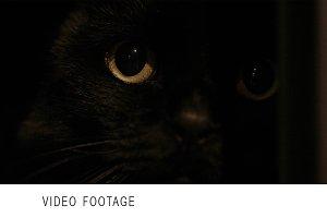 Cat's face.