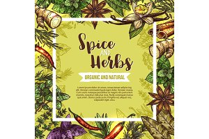 Herb and spice sketch label with seasonings frame