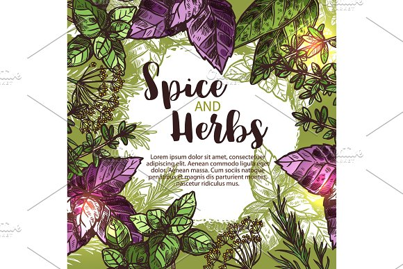 Spice And Herb Poster With Frame Of Fresh Plant