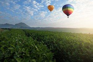 Hot air balloon flying over tea plan