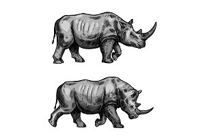 African rhino walking sketch of rhinoceros animal