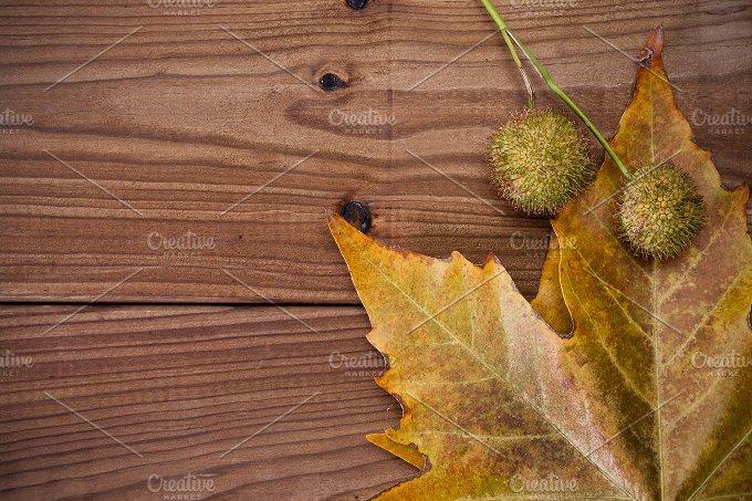IMG_9718.jpg - Nature