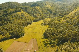 Aerial view of a rice field. Philippines, Bohol.