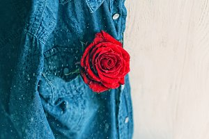 Rose on background of blue denim
